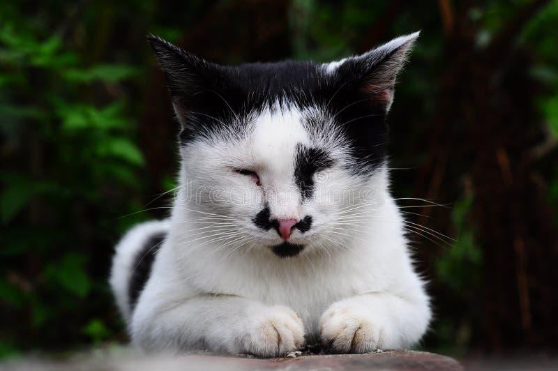 Είναι μια χαριτωμένη γάτα έχει mustache Έτσι, κάθε επάνω το καλέστε ιαπωνικά στοκ εικόνες