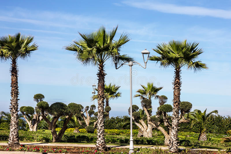 είσοδος ο μπροστινός Hassan ΙΙ της Κασαμπλάνκα τετράγωνο μουσουλμανικών τεμενών του Μαρόκου Φοίνικες, πράσινο πάρκο, φυσικό τοπίο στοκ εικόνες
