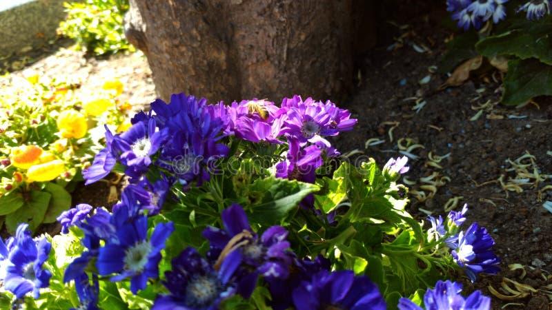 Είδος μελισσών στοκ φωτογραφία με δικαίωμα ελεύθερης χρήσης