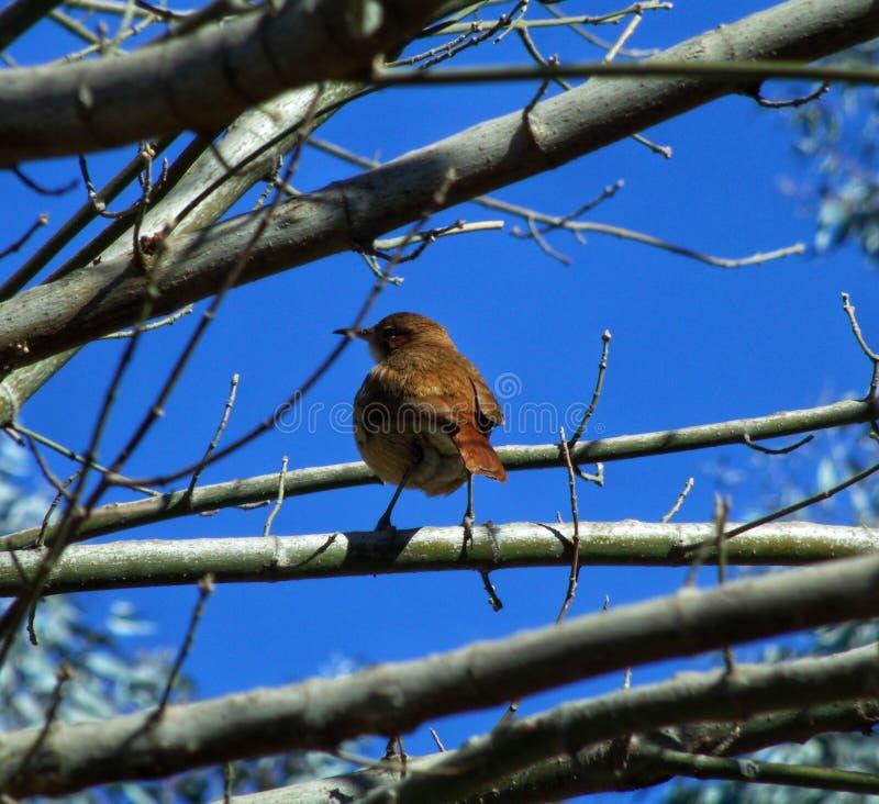 Εγγενές πουλί στο δέντρο στοκ εικόνες