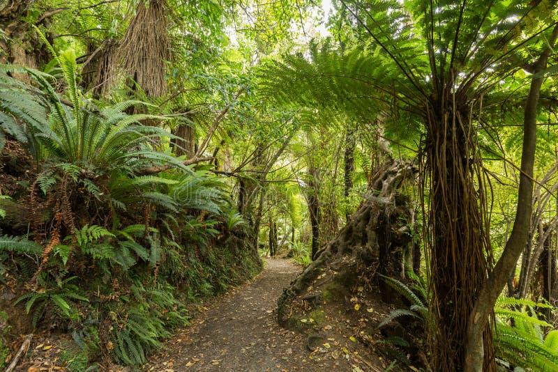 Εγγενής θάμνος της Νέας Ζηλανδίας στοκ φωτογραφία με δικαίωμα ελεύθερης χρήσης