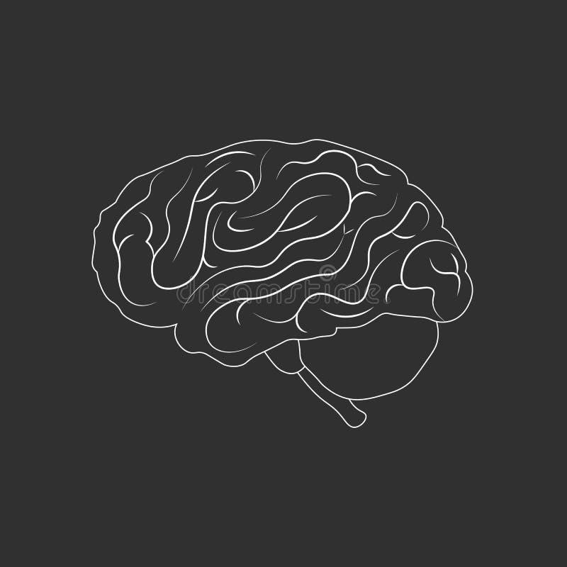 Εγκέφαλος ή δευτερεύον διανυσματικό εικονίδιο περιλήψεων μυαλού Ιατρική απεικόνιση διανυσματική απεικόνιση