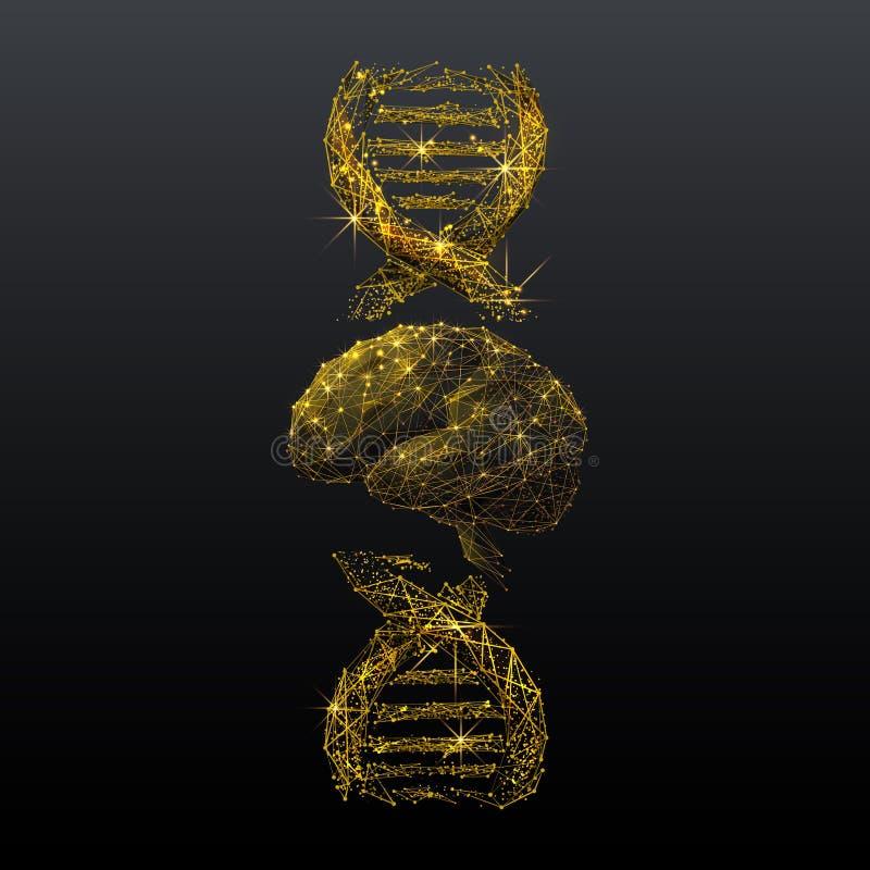 Εγκέφαλος και σπειροειδής χρυσή χαμηλή πολυ απεικόνιση wireframe DNA ελεύθερη απεικόνιση δικαιώματος