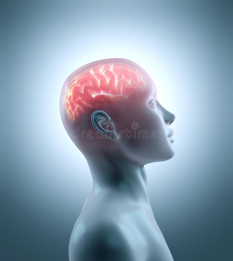 εγκέφαλος καυτός ελεύθερη απεικόνιση δικαιώματος