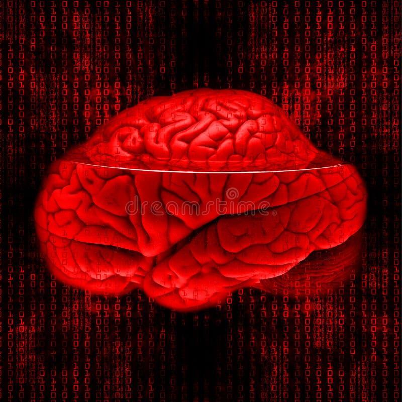 εγκέφαλος ψηφιακός στοκ φωτογραφίες με δικαίωμα ελεύθερης χρήσης