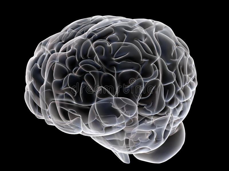 Download εγκέφαλος απεικόνιση αποθεμάτων. εικονογραφία από απεικόνιση - 1533590