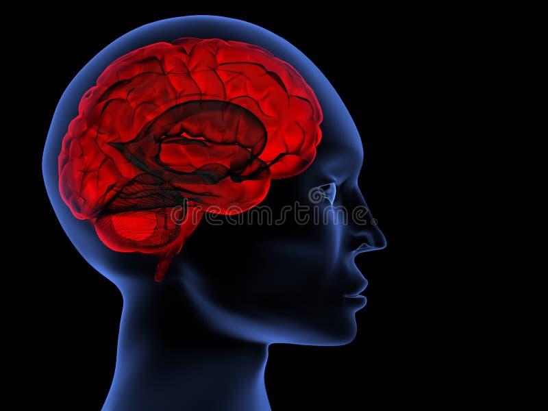 εγκέφαλος απεικόνιση αποθεμάτων