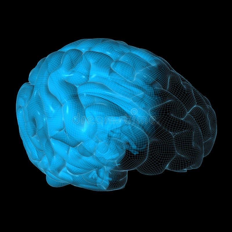 εγκέφαλος wireframe διανυσματική απεικόνιση