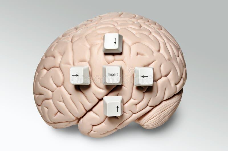 Εγκέφαλος με τα κλειδιά υπολογιστών στοκ εικόνα