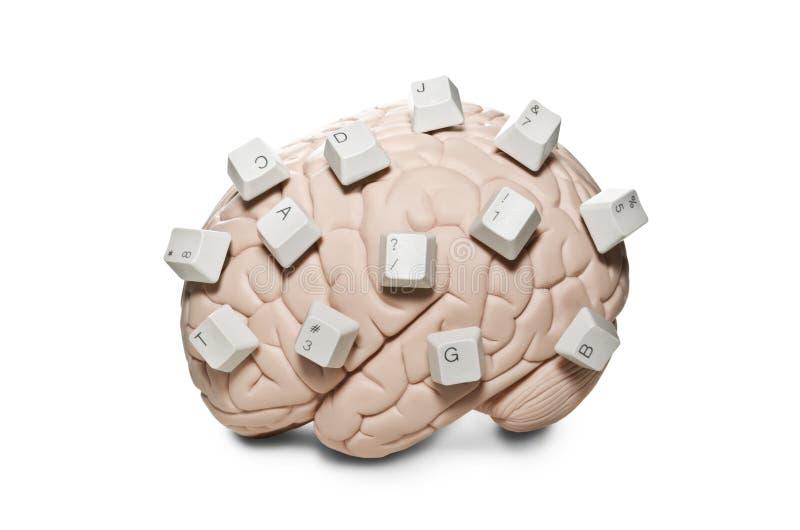 Εγκέφαλος με τα κλειδιά υπολογιστών στοκ φωτογραφία με δικαίωμα ελεύθερης χρήσης