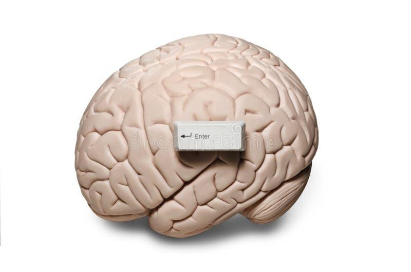 Εγκέφαλος με τα κλειδιά υπολογιστών στοκ φωτογραφία