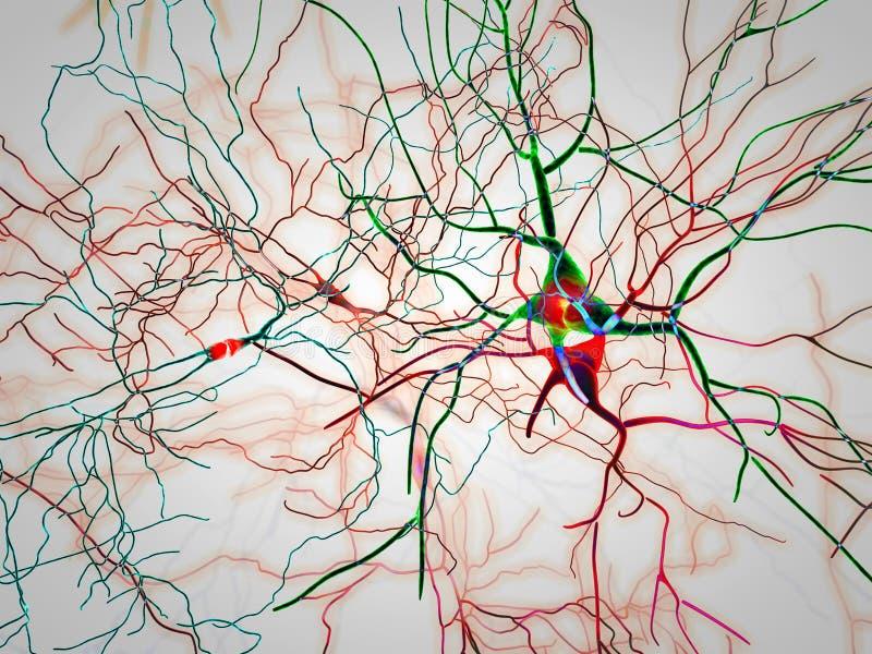 Εγκέφαλος, νευρώνες, συνάψεις, νευρικό δίκτυο, εκφυλιστικές ασθένειες, Parkinson ελεύθερη απεικόνιση δικαιώματος