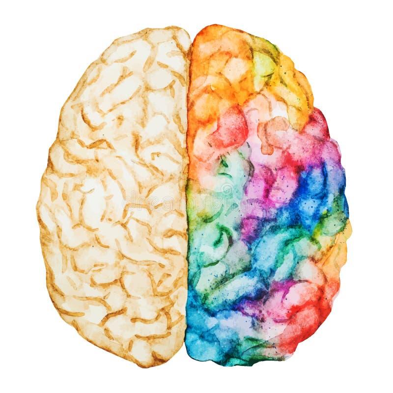 Εγκέφαλος Watercolor ελεύθερη απεικόνιση δικαιώματος