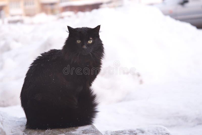 Εγκαταλειμμένες γάτες οδών, ζωική κατάχρηση, θλίψη στοκ φωτογραφίες
