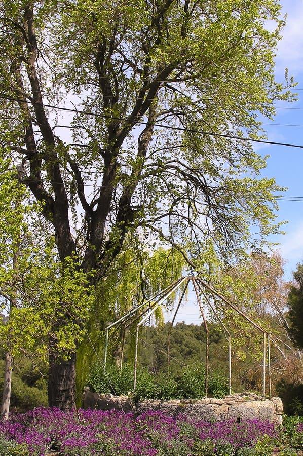 Εγκαταλειμμένος καλά δίπλα στο δέντρο στοκ εικόνα