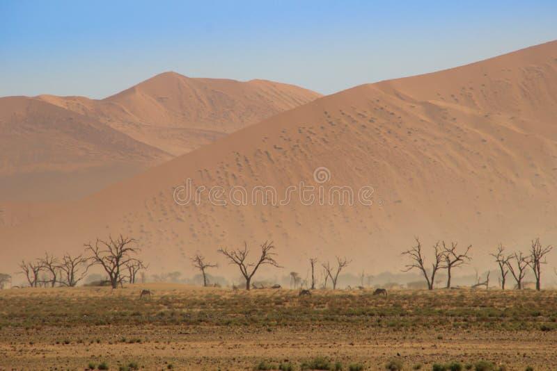 Εγκαταλειμμένο ξηρό πορτοκαλί τοπίο της Ναμίμπια και του βόσκοντας κοπαδιού της αντιλόπης στοκ εικόνες