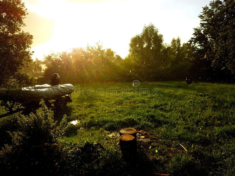 Εγκαταστάσεις δέντρων χλόης ήλιων βροχής στοκ φωτογραφία με δικαίωμα ελεύθερης χρήσης