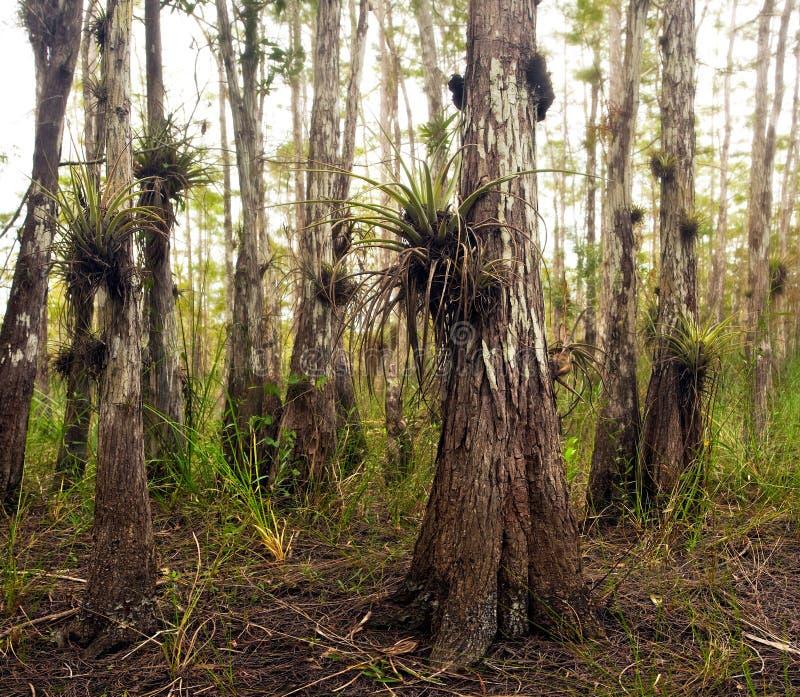 Εγκαταστάσεις αέρα στη Φλώριδα Everglades στοκ εικόνα