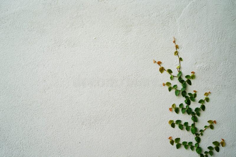 Εγκαταστάσεις αναρριχητικών φυτών στον τοίχο στοκ φωτογραφία