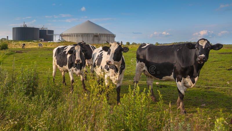 Εγκαταστάσεις βιοαερίων με τις αγελάδες σε ένα αγρόκτημα στοκ εικόνες