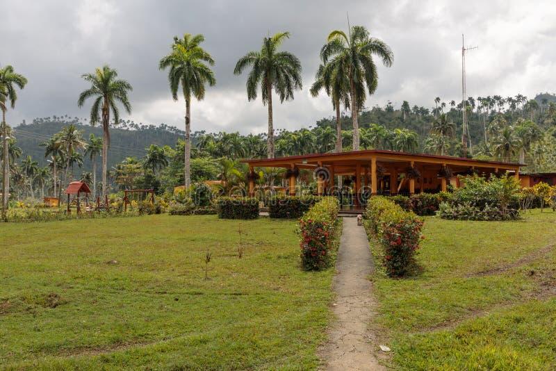 Εγκαταστάσεις διακοπών με τους φοίνικες για τους εγγενείς πολίτες εθνικό park alejandro de humboldt κοντά στο baracoa - Κούβα στοκ εικόνα
