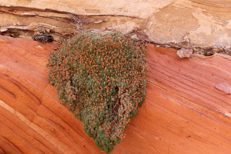Εγκαταστάσεις ερήμων στην Αριζόνα στοκ εικόνα με δικαίωμα ελεύθερης χρήσης