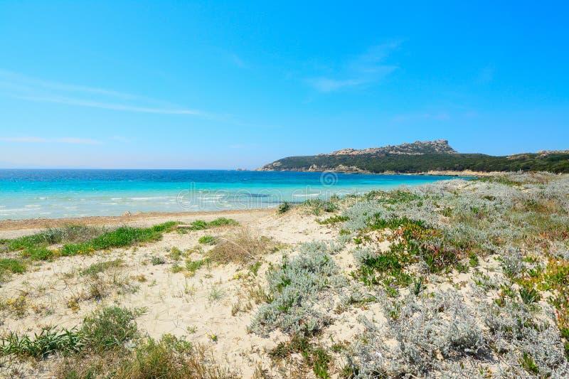 Εγκαταστάσεις και άμμος στην παραλία στοκ φωτογραφίες με δικαίωμα ελεύθερης χρήσης