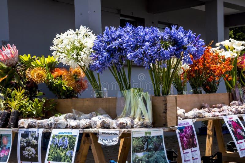 Εγκαταστάσεις και λουλούδια για την πώληση κοντά σε Santana στη Μαδέρα που είναι ένα όμορφο χωριό στη βόρεια ακτή στοκ φωτογραφίες