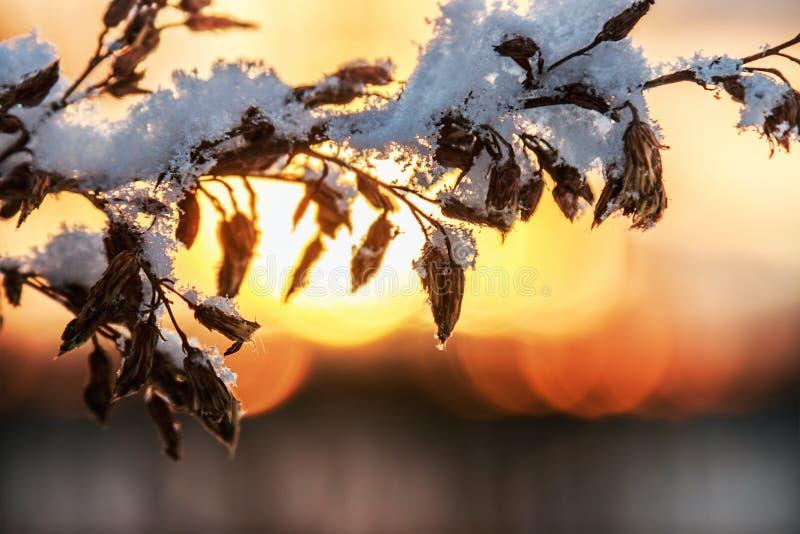 Εγκαταστάσεις κλάδων με το πεσμένο χιόνι στο χειμερινό δάσος στοκ φωτογραφία με δικαίωμα ελεύθερης χρήσης