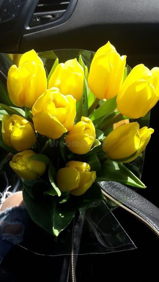 Εγκαταστάσεις λουλουδιών στοκ φωτογραφίες με δικαίωμα ελεύθερης χρήσης