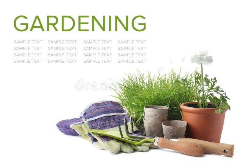 Εγκαταστάσεις με τις προμήθειες κηπουρικής στο άσπρο υπόβαθρο στοκ εικόνα με δικαίωμα ελεύθερης χρήσης