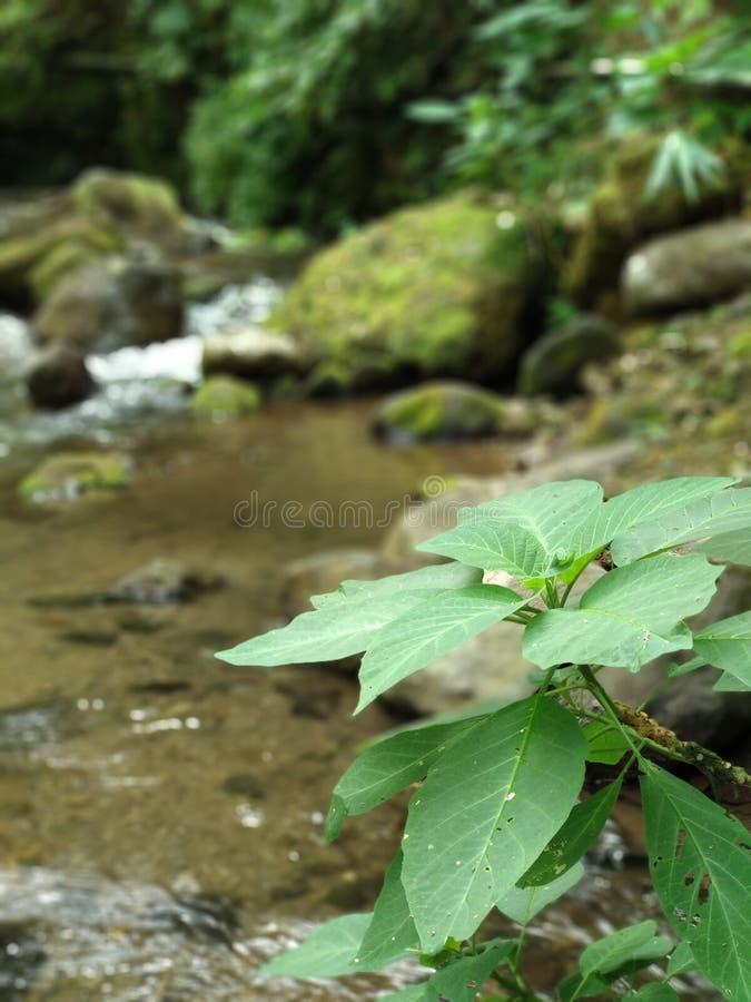 Εγκαταστάσεις ποταμών, φύση στοκ εικόνες