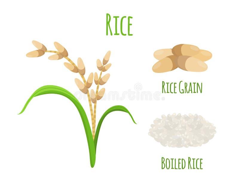 Εγκαταστάσεις ρυζιού, χορτοφάγα τρόφιμα Πράσινη συγκομιδή, σίτος oryza επίσης corel σύρετε το διάνυσμα απεικόνισης απεικόνιση αποθεμάτων