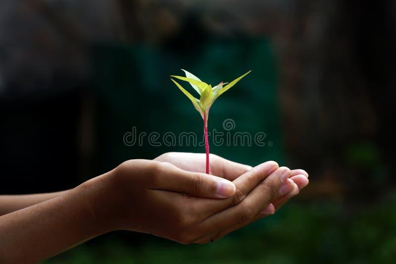 Εγκαταστάσεις στα χέρια, ανθρώπινες νέες εγκαταστάσεις εκμετάλλευσης χεριών στοκ φωτογραφία με δικαίωμα ελεύθερης χρήσης