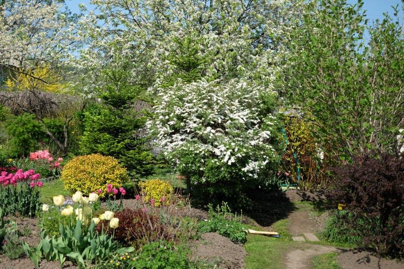 Εγκαταστάσεις στον κήπο στην ηλιόλουστη θερινή ημέρα στοκ εικόνα με δικαίωμα ελεύθερης χρήσης