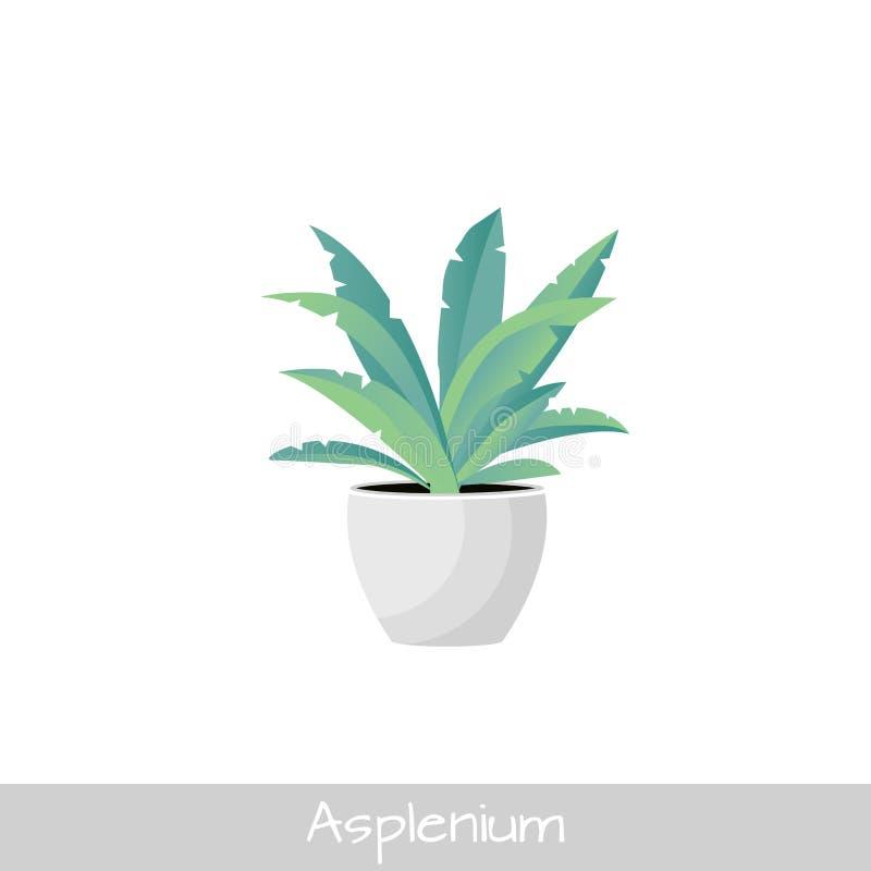Εγκαταστάσεις στο δοχείο Λουλούδι Asplenium   διανυσματική απεικόνιση