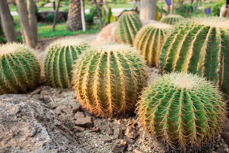 Εγκαταστάσεις του δέντρου κήπων ερήμων στοκ φωτογραφίες με δικαίωμα ελεύθερης χρήσης