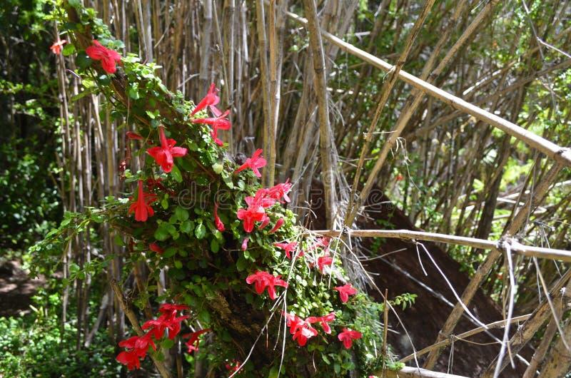 Εγκαταστάσεις των συγκρατημένων τροπικών δασών Valdivian στη νότια Χιλή της Χιλής Παταγωνία στοκ εικόνες με δικαίωμα ελεύθερης χρήσης