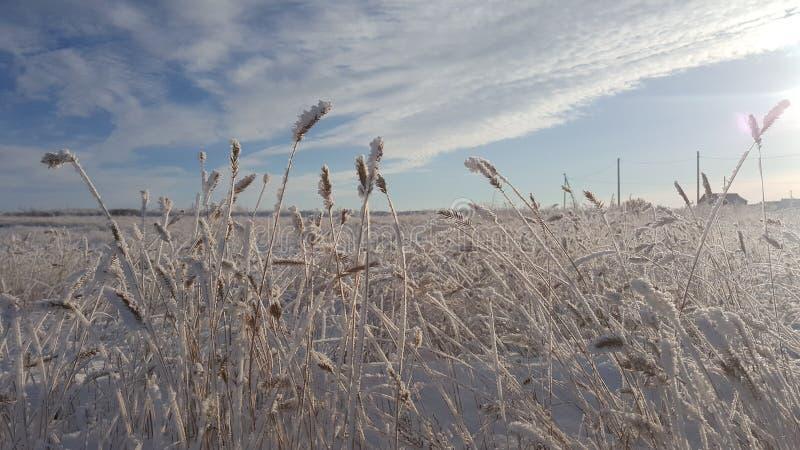 Εγκαταστάσεις χειμερινών τοπίων που καλύπτονται με το χιόνι στα πλαίσια του ηλιοβασιλέματος Παγωμένες αυξήσεις στα πλαίσια του α στοκ φωτογραφία με δικαίωμα ελεύθερης χρήσης