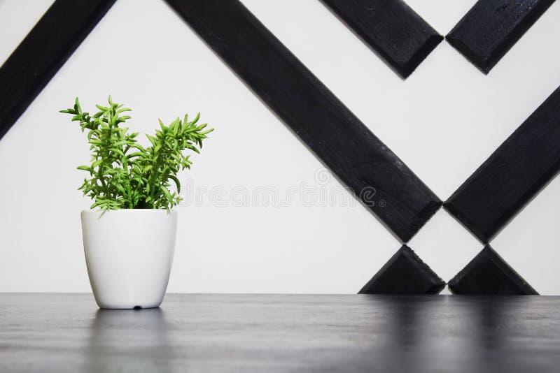 Εγκαταστάσεις flowerpot στον πίνακα στοκ φωτογραφίες
