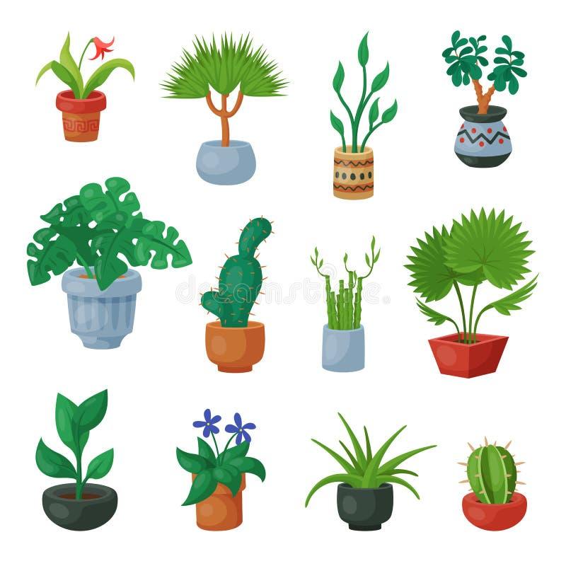 Εγκαταστάσεις flowerpots στα σε δοχείο flowery houseplants για την εσωτερική διακόσμηση με τους βοτανικούς floral κάκτους συλλογή διανυσματική απεικόνιση
