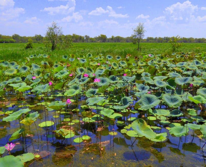 Εγκαταστάσεις Lotus στο λουλούδι στοκ φωτογραφίες με δικαίωμα ελεύθερης χρήσης