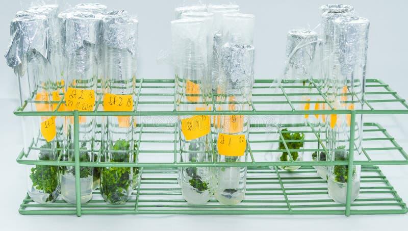 Εγκαταστάσεις vitro στοκ εικόνες