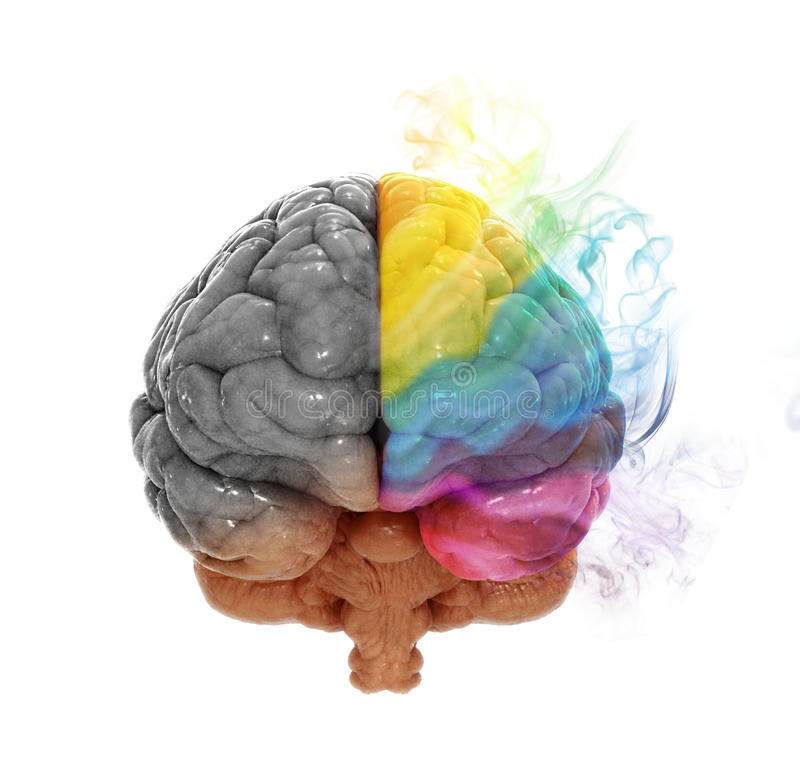 Εγκεφαλική έννοια ημισφαιρίου δημιουργικότητας απεικόνιση αποθεμάτων