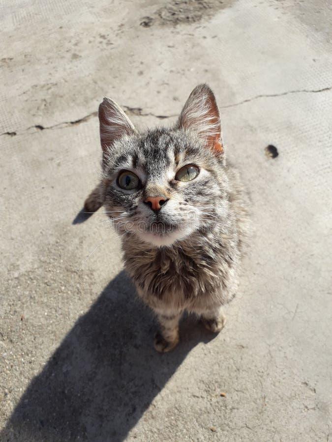 Εγχώρια γάτα στοκ εικόνα με δικαίωμα ελεύθερης χρήσης