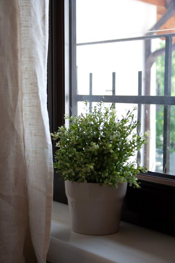 Εγχώρια εσωτερική λεπτομέρεια με τις σε δοχείο εγκαταστάσεις πίσω από την κουρτίνα στοκ εικόνες