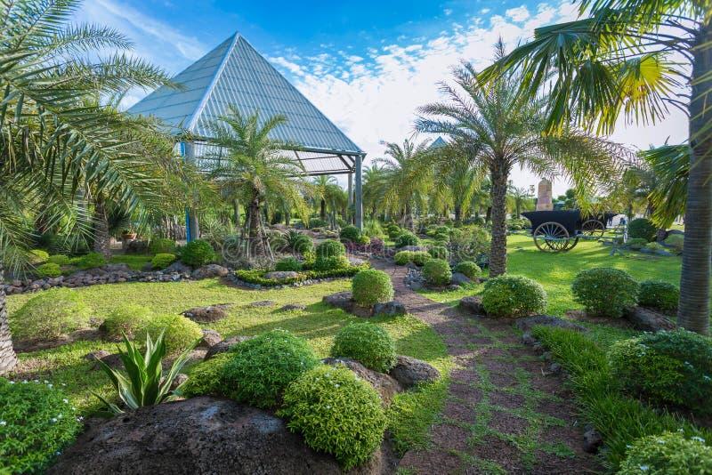 Εγχώριος κάκτος στον κήπο της ευτυχίας στοκ φωτογραφία με δικαίωμα ελεύθερης χρήσης