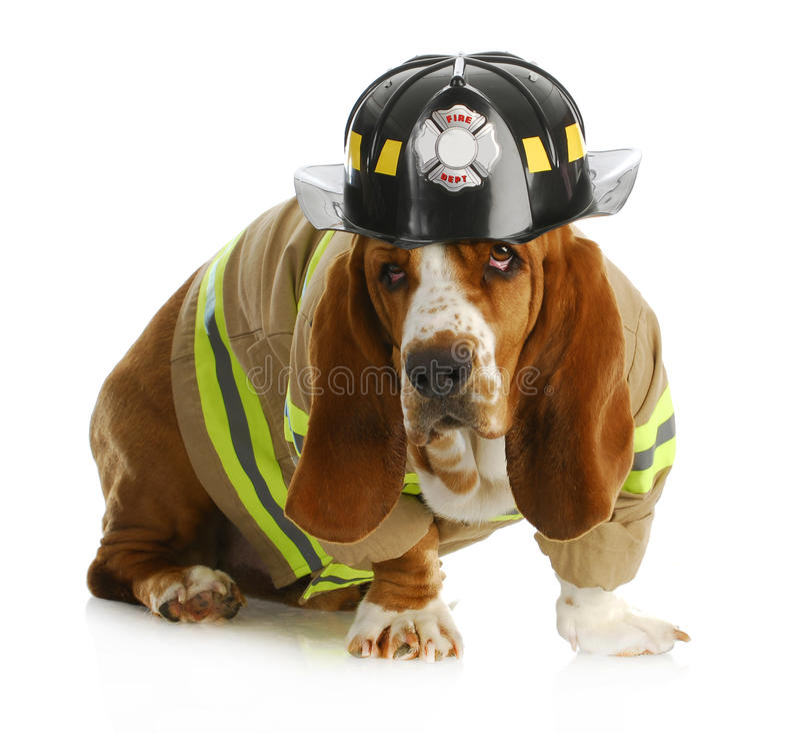 Εθελοντής πυροσβέστης σκυλιών στοκ εικόνες
