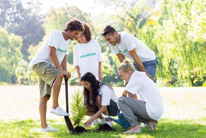 Εθελοντές που φυτεύουν στο πάρκο στοκ φωτογραφίες με δικαίωμα ελεύθερης χρήσης