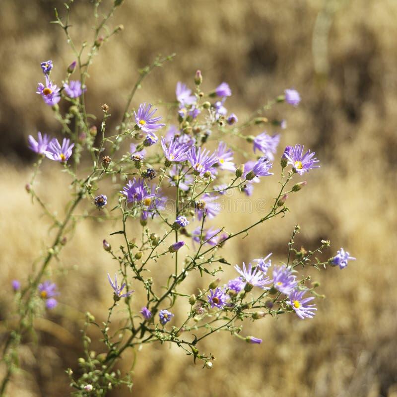 εθνικά wildflowers πάρκων στοκ εικόνες με δικαίωμα ελεύθερης χρήσης